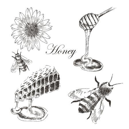 vector honey, honey cells, honey stick, bee illustration. detailed hand drawn sketch of nature object Ilustracja