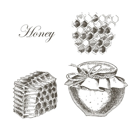 vector honey, honey cells, honey stick, bee illustration. detailed hand drawn sketch of nature object Illustration