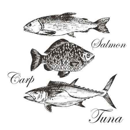vector fish sketch drawing - salmon, trout, carp, tuna. hand drawn sea food illustrations