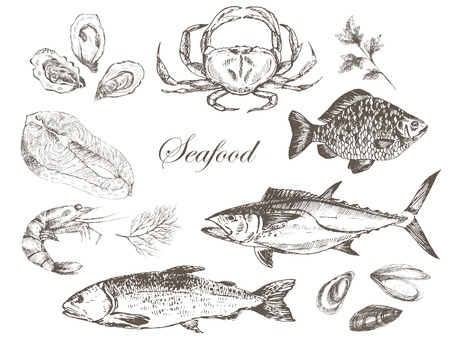 mussel: vector hand drawn seafood set - shrimp, crab, lobster, salmon, oyster, mussel, tuna, trout, carp. mediterranean cuisine seafood sketch
