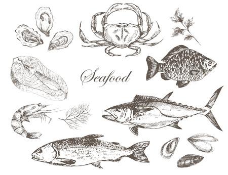 salmon steak: vector hand drawn seafood set - shrimp, crab, lobster, salmon, oyster, mussel, tuna, trout, carp. mediterranean cuisine seafood sketch