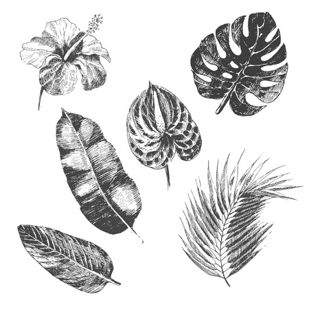 tropical: vector hand drawn tropical plants and exotic flowers - palm leaves