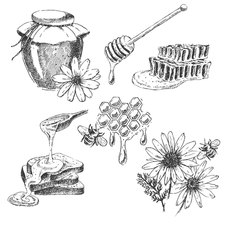 vector honey elements set. hand drawn honey jar, spoon, stick, cells, camomile. ink sketch of organic nature product Ilustracja