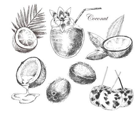 Vektor Kokosnüsse Handskizze mit Palmblättern gezeichnet. Vintage-Stil detaillierte Tinte und Bleistift Abbildungen