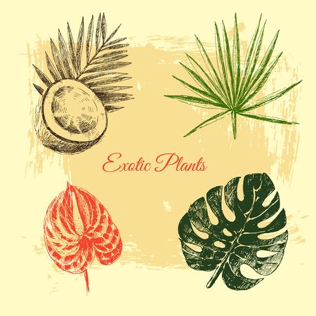 vector hand drawn tropical plants and exotic flowers - palm leaves