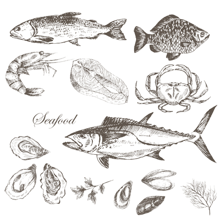 salmon steak: vector salmon steak hand drawn illustration with rosemary and pepper