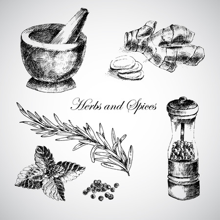 pepper mill: vector hand drawn herbs and spices - ginger, pepper, mint. sketch designer element collection Illustration