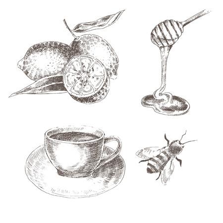 lemon, honey spoon, coffee cup, bee. sketch drawing healthy food collections