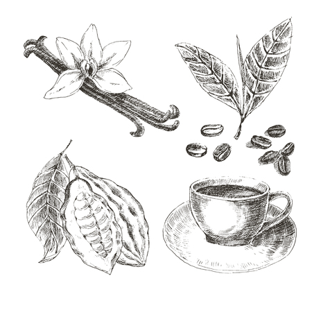 set with dessert spices. Vintage illustration. Retro collections with vanilla, cocoa beans, coffee beans, coffee leaves, cup of hot drink