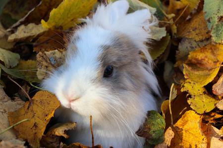 cute rabbit in autumn Banque d'images