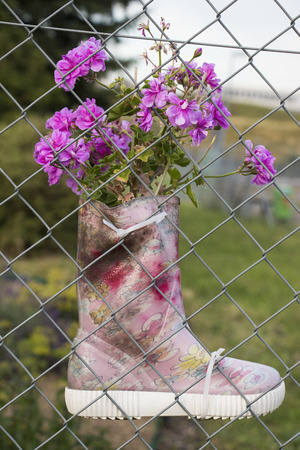 Flowers grow from a childrens boot attached to a fence Zdjęcie Seryjne