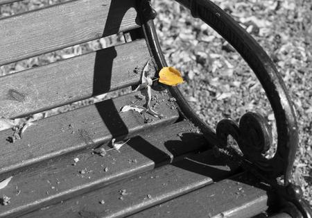 Closeup of an autumnal park bench