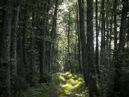 a forest clearing with beautiful sunbeams