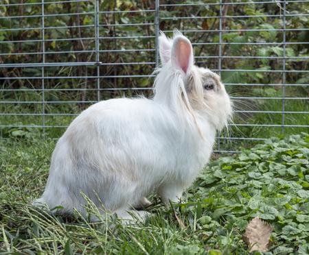 a white rabbit in the garden
