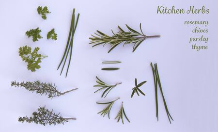 isolated herbs on a white background Stock Photo