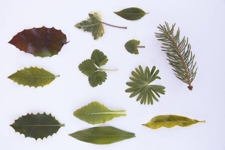 isolated leaves on a white background