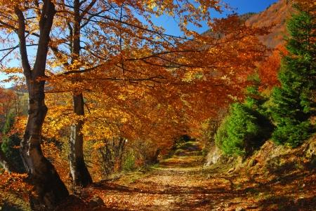 fall  mountain landscape in Romania Stock Photo - 11515028