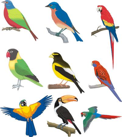 set of  nine birds