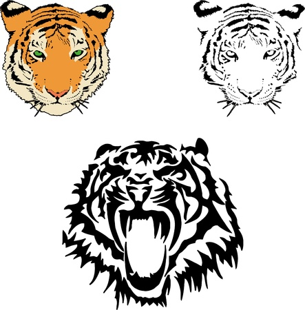 Ilustraci�n vectorial de la cara de un tigre s