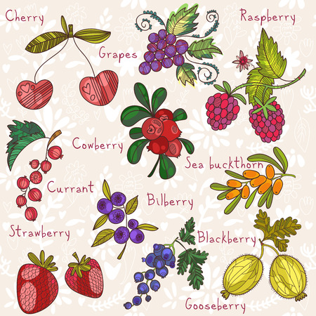 bilberry: Bright  berries set in vector. Raspberry, bilberry, cherry,cowberry,black currant, strawberry, sea buckthorn, blackberry,grapes and gooseberry