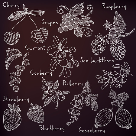 blackberry: Stylish berries set in vector. Raspberry, bilberry, cherry,cowberry,black currant, strawberry, sea buckthorn, blackberry,grapes and gooseberry Illustration