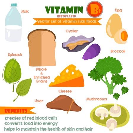 Vitaminas y Minerales alimentos Illustrator establece 7.Vector conjunto de alimentos ricos en vitaminas. B2-leche Vitamina, huevo, espinacas, las ostras, el queso, hígado, champiñones y brócoli