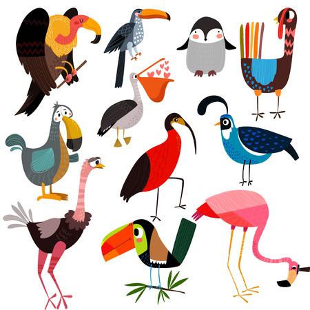 Big set of different wild birds-vulture