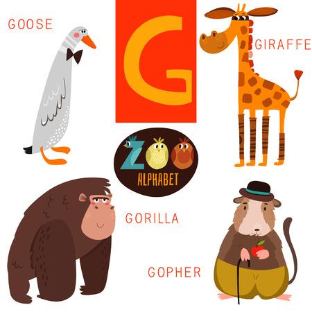 animaux du zoo: Mignon alphabet zoo de G lettre. Illustration