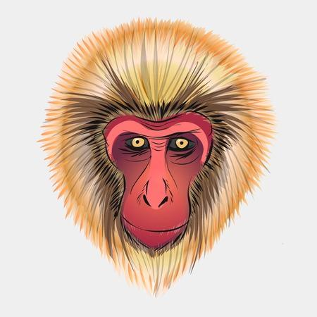 Monkey head sketch. Vector graphics for Macaca fuscata