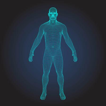 Ludzkie ciało model szkieletowy 3D Ilustracje wektorowe