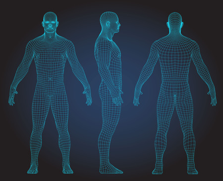 Set of 3D wire frame human body vector illustration. Front, Back, Side view