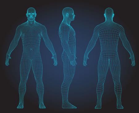 Satz der Vektorillustration des menschlichen Körpers des Drahtrahmens 3D. Vorderseite, Rückseite, Seitenansicht