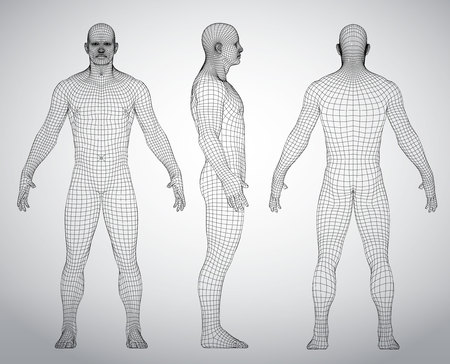 Set of 3D wire frame human body vector illustration. Front, Back, Side view. Polygonal model