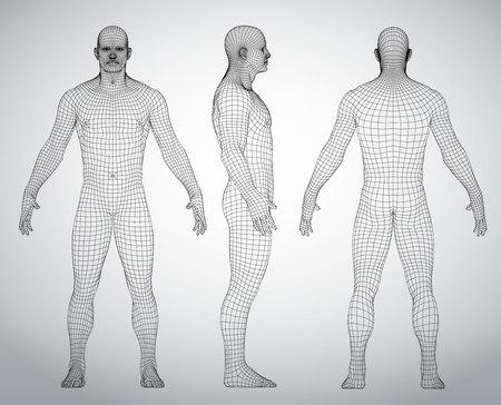 Satz der Vektorillustration des menschlichen Körpers des Drahtrahmens 3D. Vorderseite, Rückseite, Seitenansicht. Polygonales Modell Vektorgrafik