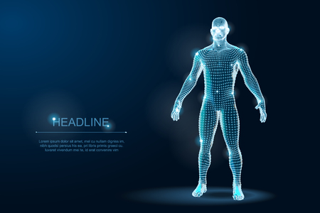 Human Body 3D Polygonal Wireframe Blueprint. Vector Illustration