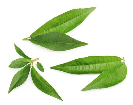 Perzik blad geïsoleerd op een witte achtergrond
