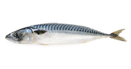geïsoleerd makreel vis