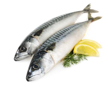 고등어 생선은 고립 스톡 콘텐츠