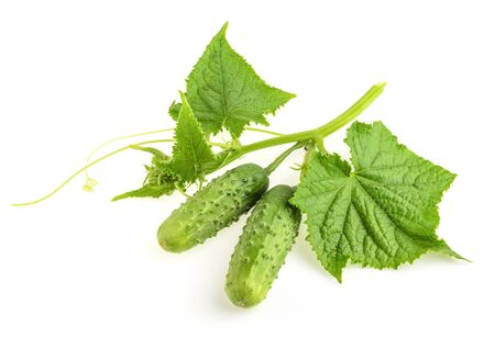 cuke: Cucumbers plant on a white
