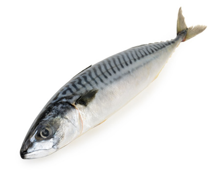 mackerel fish isolated