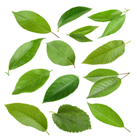 Collection of garden leaves isolated on white background Banque d'images