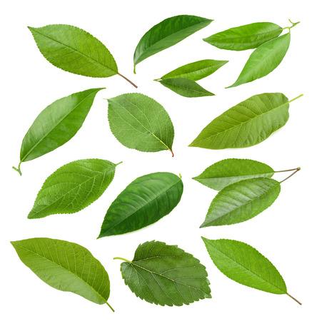Het verzamelen van de tuin bladeren geïsoleerd op een witte achtergrond Stockfoto - 43075277