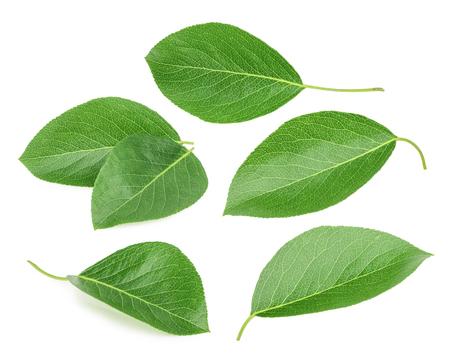 pear: Peras hojas aisladas sobre un fondo blanco Foto de archivo