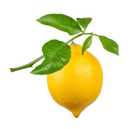 twig: Lemon on twig isolated
