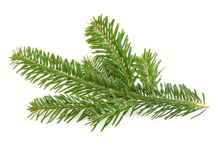 branche: Branche de sapin isolé sur blanc