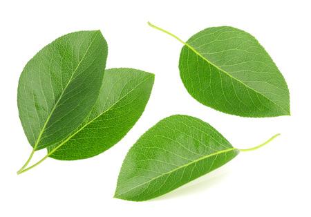 pera: Peras hojas aisladas sobre un fondo blanco Foto de archivo