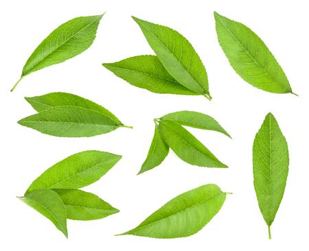 peach leaf isolated Standard-Bild