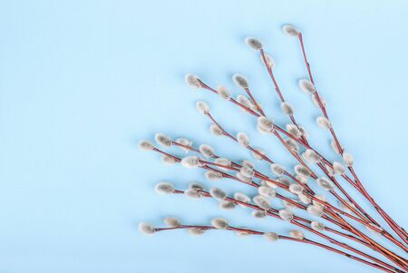 twigs: Willow twigs on blue background