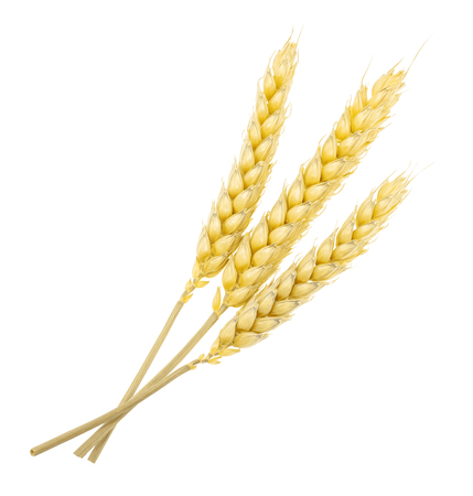 Wheat isolated on white. without shadow Stock Photo