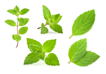 mint leaves isolated. set